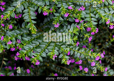 Photograph of little purple flowers taken during the middle of the day. - Stock Photo