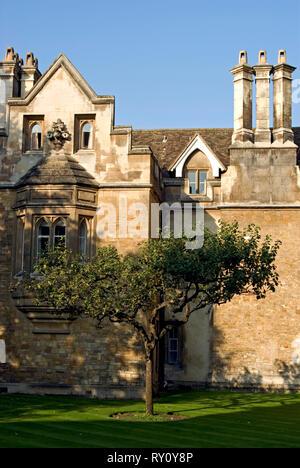 Newton's Apple Tree, Cambridge - Stock Photo