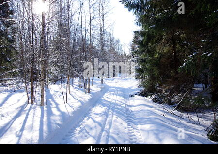 Beautiful winter landscapes in the forest on a cold and sunny day in Sweden. - Stock Photo