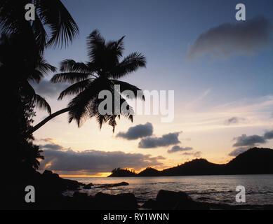 Seychelles. Mahé. Coconut palms. - Stock Photo
