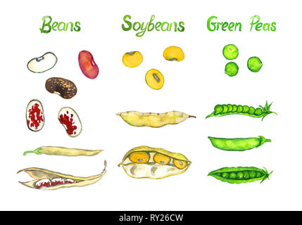 Beans, soybeans, green peas, the pods open and close, isolated hand painted watercolor illustration - Stock Photo