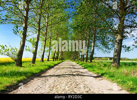 Road among green fields, blue sky in the background - Stock Photo