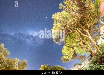Amazing Milky Way above pine trees, Australia. - Stock Photo