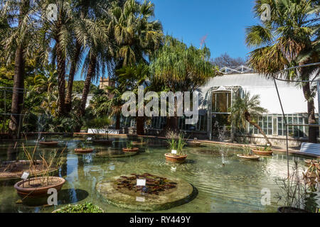Valencia Botanical Garden, Water plants and greenhouse, Spain