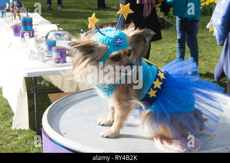 London, UK. 10th Mar, 2019. 'Brexit is a Dogs Dinner' demonstration at Victoria Tower Gardens, London. - credit Bruce Tanner - Stock Photo