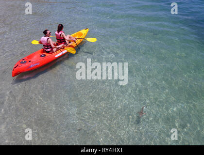 Girls on kayak viewing juvenile blacktip reef sharks (Carcharhinus melanopterus) in the shallows at Fitzroy Island, Great Barrier Reef - Stock Photo