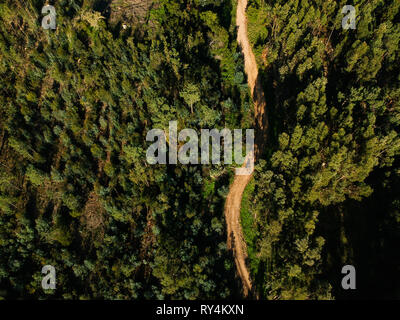 Aerial view from a path in a forest. Drone photo - Stock Photo