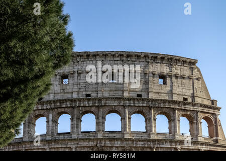 Close up of the exterior of the Roman Colosseum (also known as Flavian Amphitheatre). UNESCO. Typical roman pine tree. Colosseo. Rome, Italy, Europe - Stock Photo