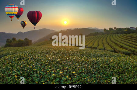 Colorful hot air balloons flying over the tea field. - Stock Photo