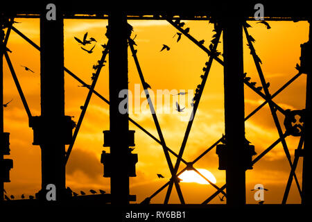 Aberystwyth, UK. 12th Mar, 2019. Despite the ferocious winds of Storm Gareth, the fiery setting sun behind Aberystwyth pier on Cardigan Bay in Wales silhouettes some of the tens of thousands of starlings that fly in to roost for the night on the forest of cast iron legs underneath the town's iconic Victorian seaside pier The west coast town is one of the few urban roosts in the country and draws people from all over the UK to witness the spectacular nightly displays between October and March. photo Credit: keith morris/Alamy Live News - Stock Photo