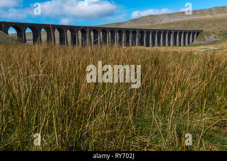 A distant shot through the meadow grass of the sweeping majestic Ribblehead Viaduct stands tall above the Ribble Valley, Yorkshire, England carrying the Settle to Carlise railway against a bright blue sky - Stock Photo