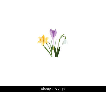 Seamless border with spring flowers. Bouquet of Crocus, narcissus, snowdrop on white. Botanical illustration. Colorful. - Stock Photo