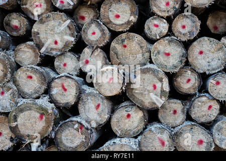 Forestry after Cyclone Friederike, near Oberweser, Weser Uplands, Weserbergland, Hesse, Germany - Stock Photo