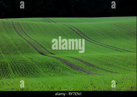 Glacially formed hills, Schleswig-Holstein, Germany, Europe Stock Photo