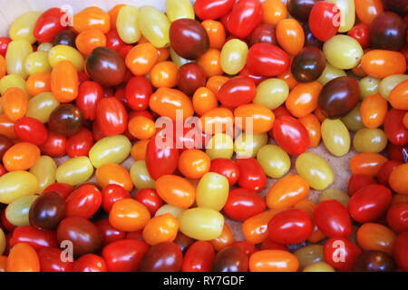 many small tomatoes of different and strange colors, yellow, red, brown and orange. genetically modified - Stock Photo
