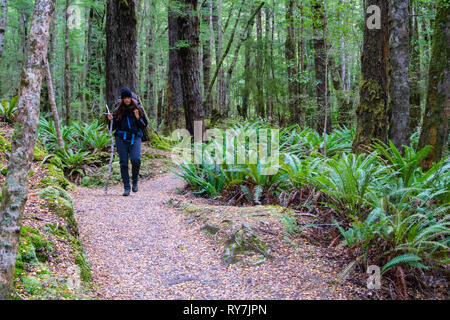 TE ANAU, NEW ZEALAND - OCTOBER 19 2018; Woman with pack tramping in New Zealand rain forest off-track in Keplar Track in South Island New Zealand - Stock Photo