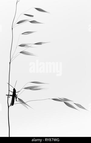 Pictorial photo of dragon-fly hanging on twig on white background - Stock Photo