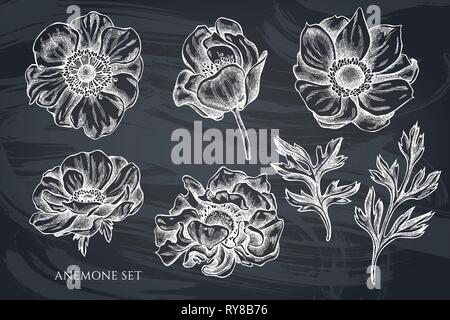 Vector collection of hand drawn chalk anemone - Stock Photo