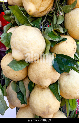 Special grade of lemons for making Limoncello liqueur - Stock Photo