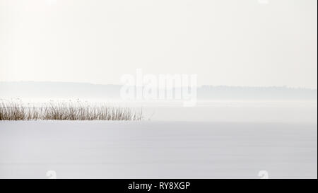 Reed point in a frozen lake with snow and a foggy horizon. - Stock Photo