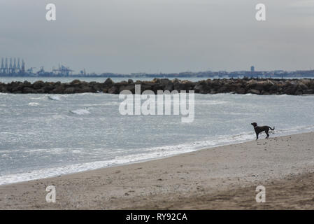 a small black dog standing in front of the sea on the beach - Stock Photo
