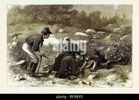 We Find Gold on Our Lot, Gold in Canada, Emigrant Life - Stock Photo