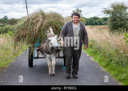 Enniscrone, Sligo, Ireland. 13th August, 2009. A farmer brings home reeds with this Donkey and cart in Enniscrone, Co. Sligo Ireland - Stock Photo