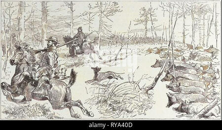 A Shooting Excursion in Turkey: Our Horses Are Seized with Panic and Stampede Madly Through the Forest - Stock Photo