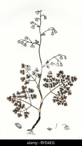 Botanical Print - Stock Photo