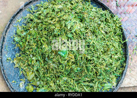 Horizontal picture of burmese green tea to get dry in Myanmar - Stock Photo