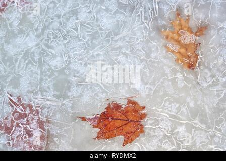 Autumn leaves suspended in ice with bubbles moving near surface.  Lines and shapes creating patterns on the top of the  frozen water. - Stock Photo