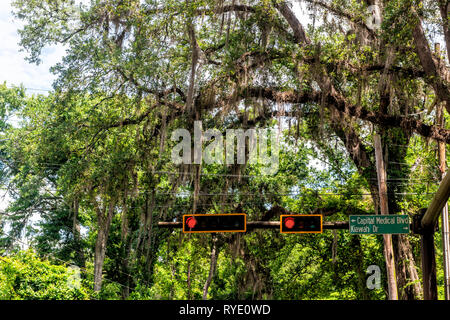 Scenic canopy road with street sign closeup in capital city of Tallahassee, Florida during day with southern live oak trees - Stock Photo