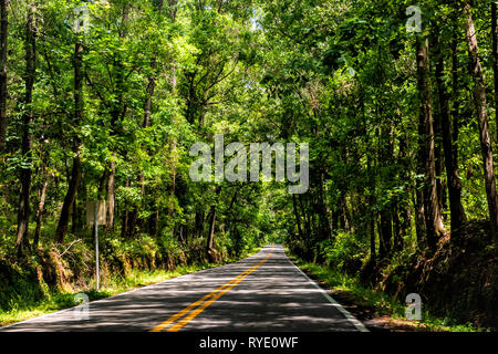 Tallahassee, USA Capital city miccosukee street scenic canopy road with nobody in Florida during day with southern live oak trees - Stock Photo