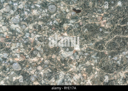 Flat top view down under shallow green Florida beach Sanibel Island water with many rocks sea shells and see-through transparent ocean - Stock Photo