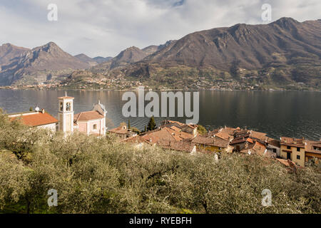 Olive grove and Carzano village of Monte Isola, Lake Iseo, Lombardy, Italy - Stock Photo