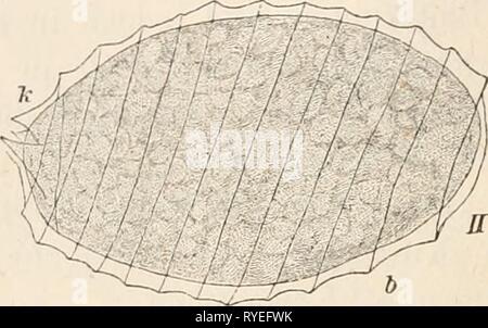 Dr. L. Rabenhorst's Kryptogamen-Flora von Deutschland, Oesterreich und der Schweiz  drlrabenhorstskr05rabe Year: 1900 - Stock Photo