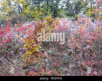Bulgarian mixed autumn wild vegetation, October landscape - Stock Photo