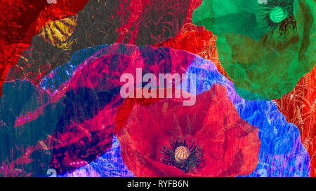 Artistic digital collage of colorful blooms close-up. Psychedelic floral background of beautiful common poppy flowers and wheat field. Surreal effect. - Stock Photo