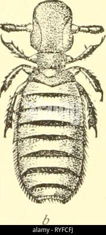 Economic entomology for the farmer and the fruit grower, and for use as a text-book in agricultural schools and colleges;  economicentomolo00smit Year: 1906 - Stock Photo