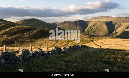 Looking north along the shepherds wall from Garelet Dod towards Garelet Hill in the Tweed Valley in the Scottish Borders in evening light.. - Stock Photo