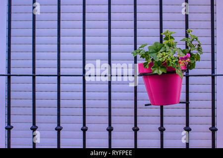 Flower in a pot. Pot of flowers standing on a windowsill. - Stock Photo