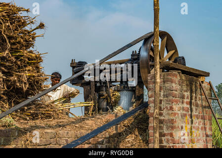 HIMACHAL PRADESH, INDIA,Worker operating a squeezing machine for sugar cane in rural India - Stock Photo