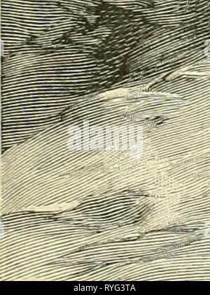 The earth and its inhabitants ..  earthitsinhabita293recl Year: 1893    ' ' ''ills - Stock Photo