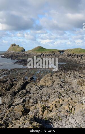 Worm's head at low tide viewed from the Inner Head, with wave cut platform, 'Devil's Bridge' rock archway and Outer Head visible, Rhossili, The Gower  - Stock Photo