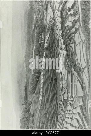 Dr. K.W. van Gorkom's Oost-Indische cultures. Opnieuw uitg. onder redactie van H.C. Prinsen Geerligs. [Door J.P. van der Stock et al.]  drkwvangorkomsoo02gorkuoft Year: 1917 - Stock Photo