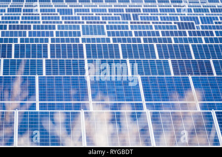 Plants in front of solar cells, solar panels, photovoltaic system.