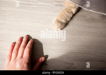 Little white cat playing on the balcony. The cat paw and human hand on the floor. Animal protection. - Stock Photo