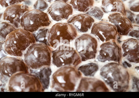 A glass cup of pearl milk tea (also called bubble tea) and a plate of tapioca ball on wooden background. Pearl milk tea is the most representative dri - Stock Photo
