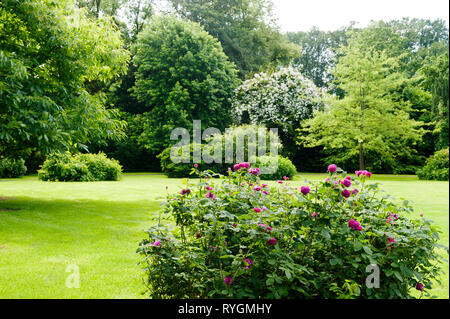 Flowers on lawn by trees - Stock Photo