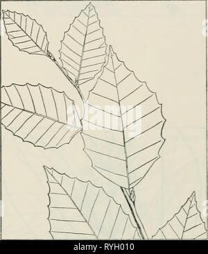 The drug plants of Illinois  drugplantsofilli44teho Year: 1951 - Stock Photo